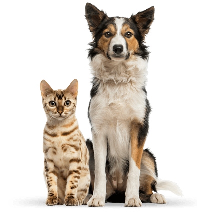 Global Pet Food Outlet Family