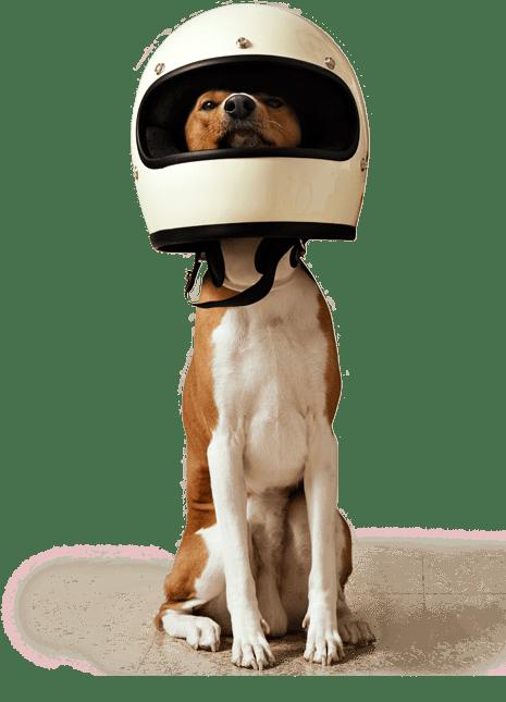 global pet food outlet dog